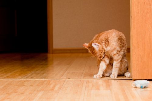 6 Tips To Prevent Your Dog From Scratching The Wood Flooring